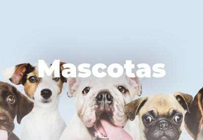 Categoria Mascotas
